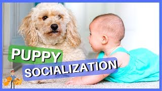 How to Socialize Your Puppy Safely: top 10 strategies