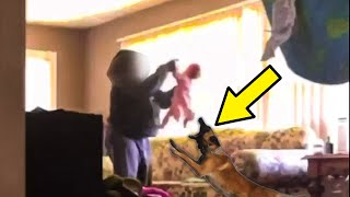 Baby Wasn't Able To Tell Parents About Cruel Sitter — But His Dog Could