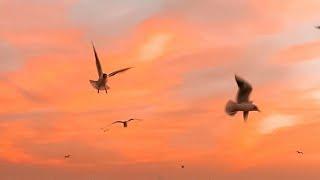 Ako pa ba ang Aamin - Eurika (Official Lyric Video) - YouTube