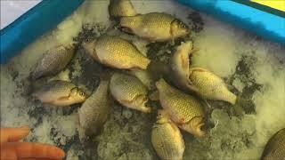 Камышные озера курганская область рыбалка