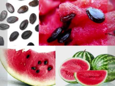 Video Menakjubkan !! Inilah 13 Manfaat Kuaci Biji Semangka Bagi Kesehatan
