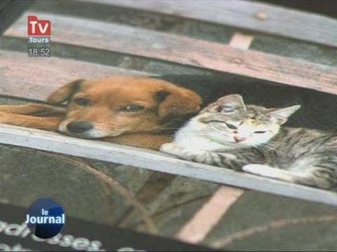 comment retrouver chat perdu campagne