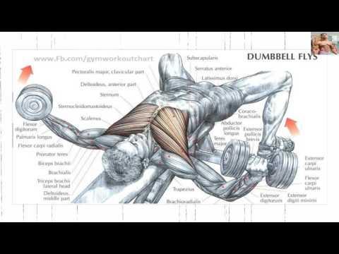 Le séchage des muscles pourquoi