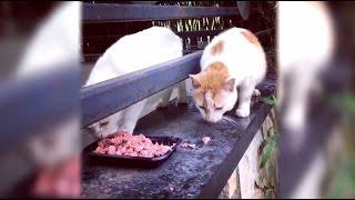 Кот-жмот: вирусное видео с котом, который не захотел делиться обедом