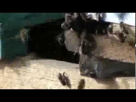 Tratament cu viermi giardia