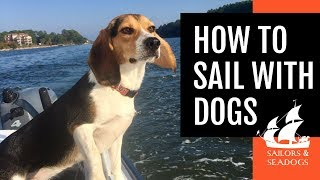 HOW TO SAIL WITH DOGS [Tips for a Pet-Friendly Voyage] // Sailors & Seadogs