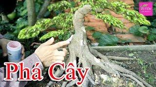 How To Bonsai 1 | Tạo Tác Cây Cảnh, Cắt Tỉa Phá để Cho Cây Sanh Có Dáng Mới | TUYẾN ARTBONSAI
