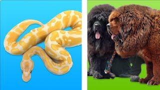 Zenginlerin Satın Alabildiği 10 Hayvan
