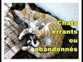 Stray or Abandoned Cats