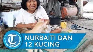 Kisah Nurbaiti, Tukang Tambal Ban yang Selalu Berbagi Makanan ke Belasan Kucing
