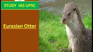 Eurasian Otter In News For UPSC/SSC/SBI/RBI/IBPS/RAILWAYS/PCS/OAS/CDS/CAPF/LIC/NDA.