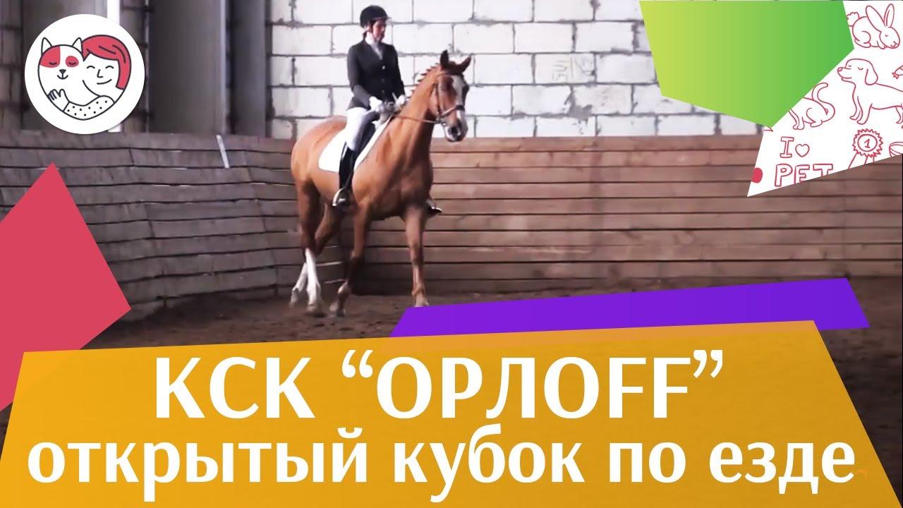 Открытый кубок КСК Орлоff   Выездка   1 на  ilikepet