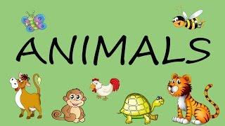 What's this? Animals.