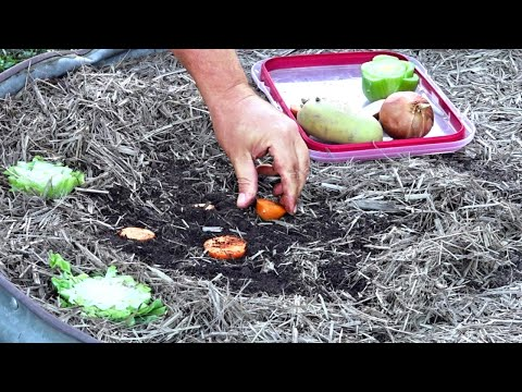 Does Regrowing Vegetables From Scraps Actually Work?
