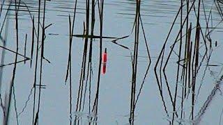 Рыбалка на поплавочную удочку в сентябре