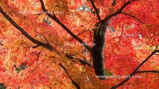 赤城自然園の紅葉