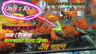 Aquarium Fish Market In Kolkata Free Video Search Site Findclip