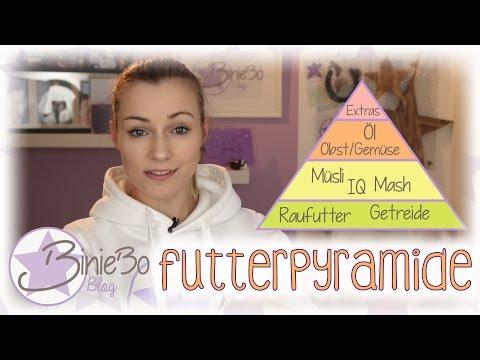 Futterpyramide!  #biniebowissen