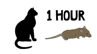 CAT GAMES - MOUSE HUNT 1 HOUR VERSION (FOR CATS ONLY)