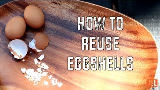 How to Reuse Eggshells | Green Your Life