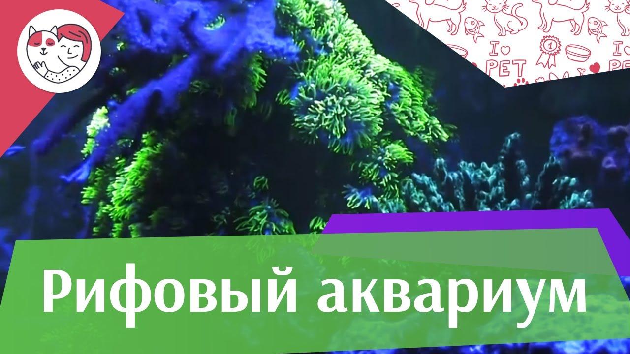 Рифовый аквариум Часть 2 АкваЛого на ilikePet