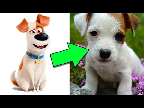 OS PERSONAGENS DE PETS NA VIDA REAL