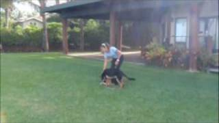 preview picture of video 'Sit Means Sit Dog Training Maui Hawaii Integrating play and obedience skills'