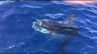 Suze Spots a Rare Mola Mola Sunfish on the Island | Suze Orman