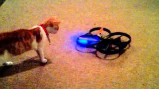 preview picture of video 'Cat vs dron prank czyli zabawka Gucia'