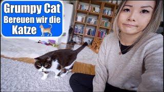 Wie haufig ist der Kryptorchidismus in Katzen?