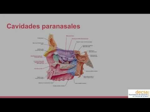Viermii din plămâni sunt simptome ale tratamentului