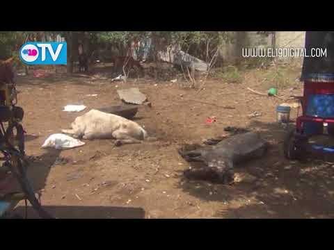 Investigan denuncia por maltrato animal