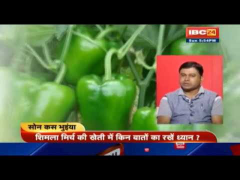 , title : 'शिमला मिर्च की खेती, Capsicum Farming || Son Kas Bhuinya
