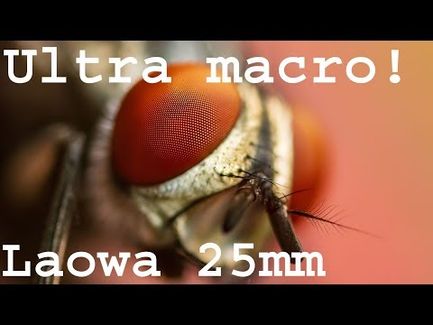 Laowa 25mm f/2.8 Ultra Macro 5x lens review