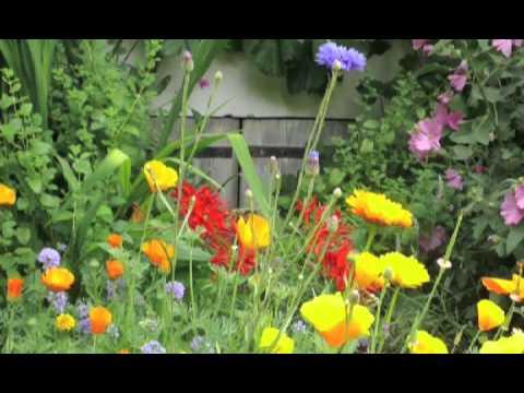 Blumenwiesen von Nova Flore