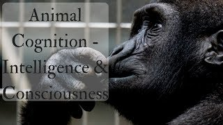 Animal Cognition - Intelligence & Consciousness