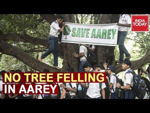 Mumbai Metro Body Confirms No Tree Felling In Aarey Till 30 Sep; Relief For Mumbai Aarey Forest