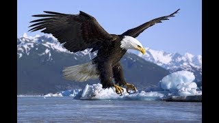 Птичку жалко! Учёные опубликовали важную информацию об орлах. Почему говорят попугаи. Док. фильм.