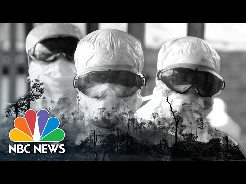 Humans To Blame For The Coronavirus? How Deforestation Gives Rise To Pandemics | Think | NBC News
