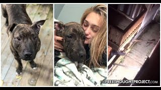 Police Taser and Shoot Dog For Protecting Its Home, Dispose of Body Before Notifying The Owner