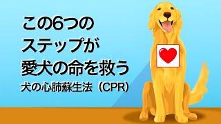災害時への備えもちろん犬にもあった緊急救命