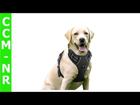 RABBITGOO Dog Harness No Pull Pet Harness Outdoor