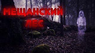 МЕЩАНСКИЙ ЛЕС