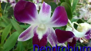 FRESH ORCHIDS NEW COLLECTIONS MALAYALAM