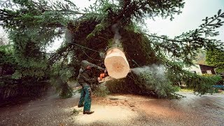 Idiots Tree Felling And Logging Fails - Huge Trees Fall Houses And Cars!
