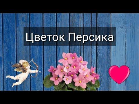 Украина 2017 астролог