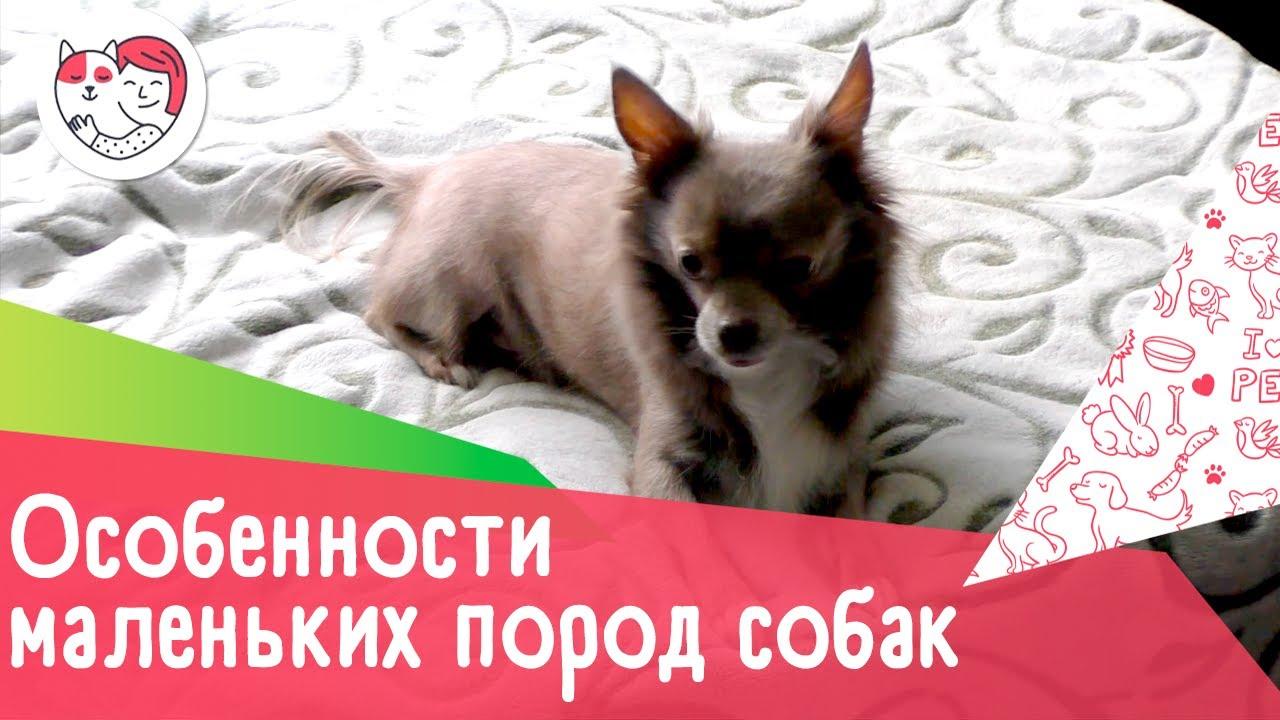 5 особенностей собак мелких пород