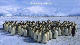 Acrophobia (Ver. In The Bed Room) - Penguin Villa