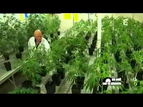 Un oeil sur la planète : Et si on légalisait le cannabis ? Part5