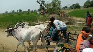 Adla bandla potilu.village adla pandhalu